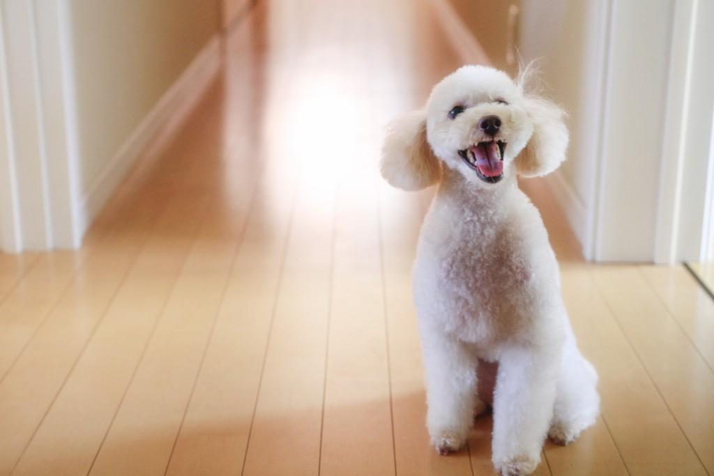 犬が暮らしやすい快適な環境づくり 優しいフローリングを使ってあげよう!