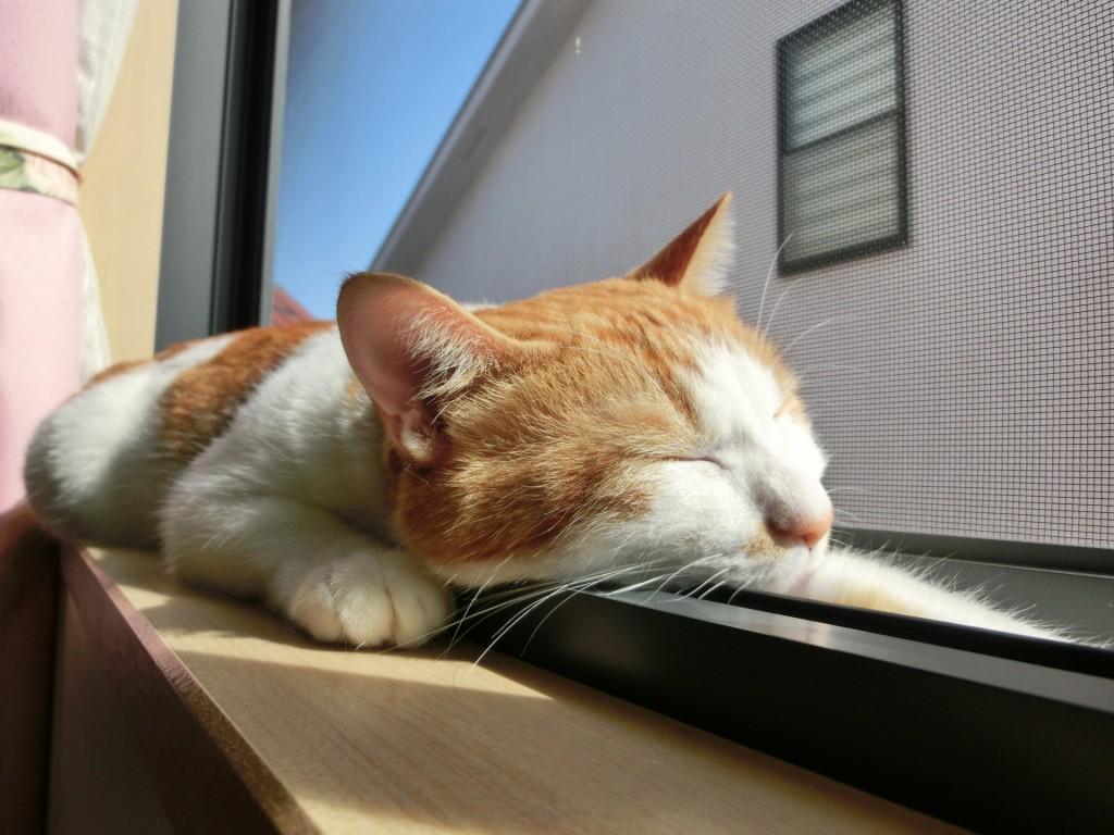 わがまま猫もこれで満足!猫と暮らす家づくり
