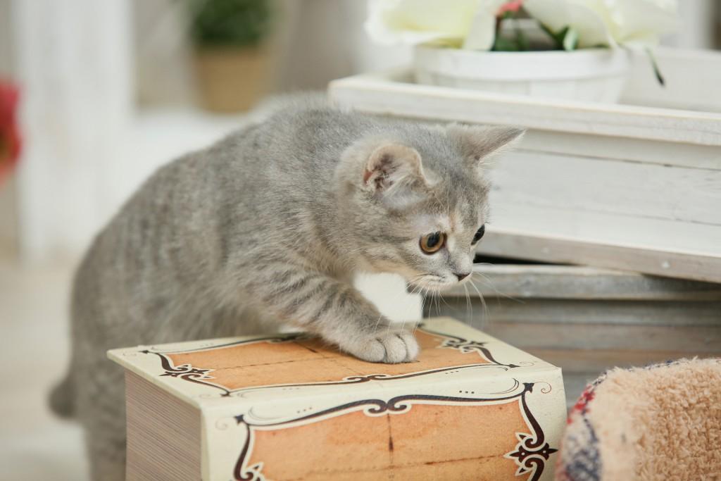 猫と暮らす注文住宅!-飼い主も猫も幸せに暮らす家づくり-