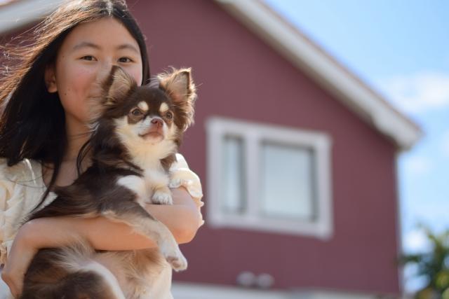 犬と暮らす家づくり。快適な毎日を過ごすために取り入れたい3つのポイント。