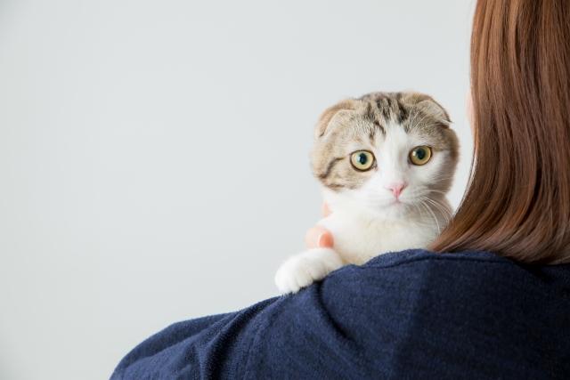 ペットと暮らせる注文住宅をお考えの方へ!リノベーション法をご紹介!