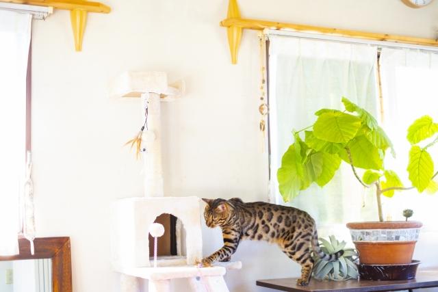 猫と暮らすための家づくりとは