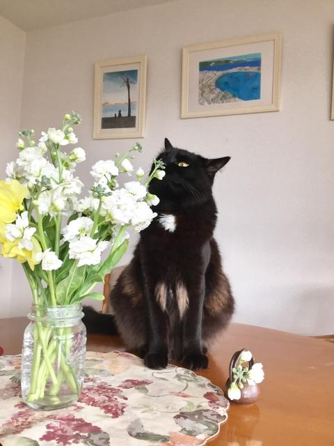 注文住宅で考える!猫と暮らす家づくり