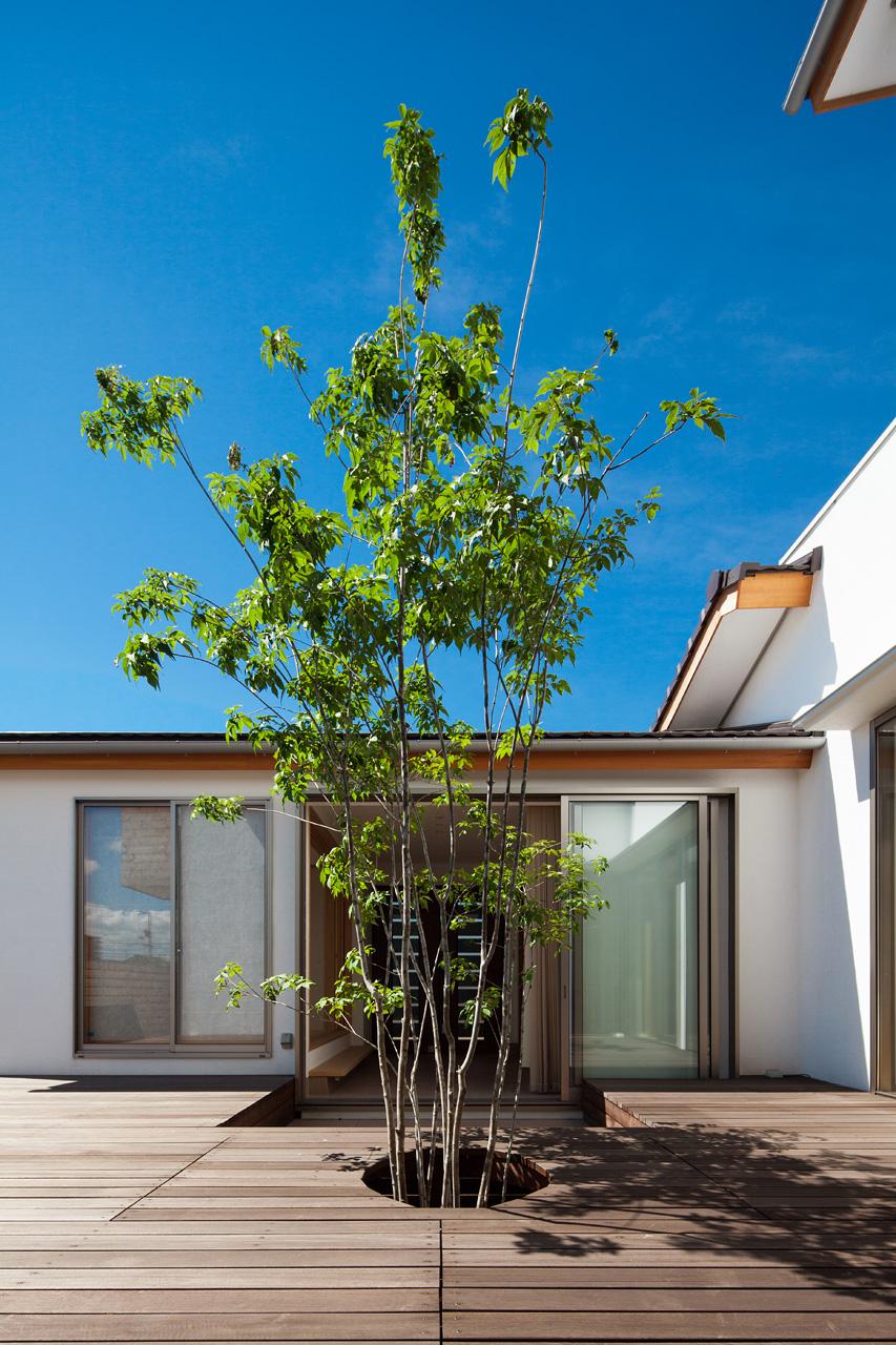 中庭とアオダモ: 玄関からはアオダモが程よい目隠しとなっています。陽が入る方向の建物を平屋におさめているため、中庭にはいつも光があふれています
