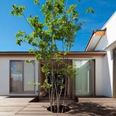 <p> 中庭とアオダモ: 玄関からはアオダモが程よい目隠しとなっています。陽が入る方向の建物を平屋におさめているため、中庭にはいつも光があふれています </p>